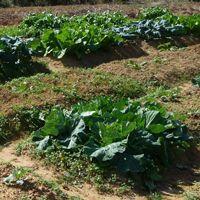 Natureトマト体験農園